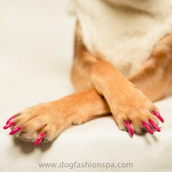 Dog Fashion Spa model wearing happy paw (bright pink) non-toxic nail polish for dogs