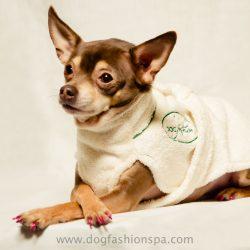 dog fashion spa model in a dog robe